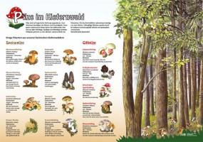 Pilze im Kiefernwald
