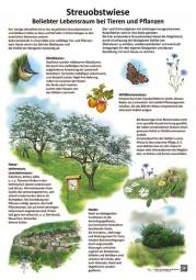 Streuobstwiese - Beliebter Lebensraum bei Tieren und Pflanzen