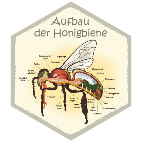 wabe aufbau honigbiene 26 x 30 cm bienenwabentafeln