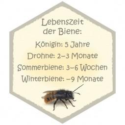Wabe Biene Lebenszeit